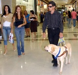 Working Dog in Airport